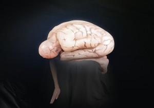Cerveau-300x211